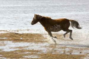 horse-running-on-the-beach